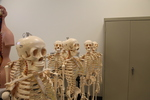 Tour Skeleton Group (2)